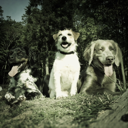 20120520_threedogs.JPG